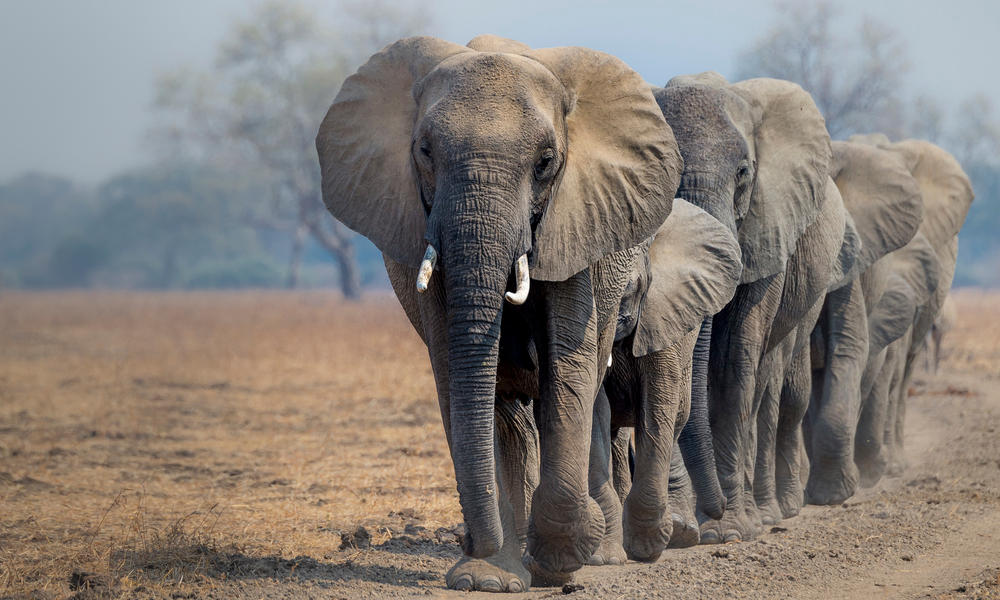 Drought kills 200 elephants in Zimbabwe